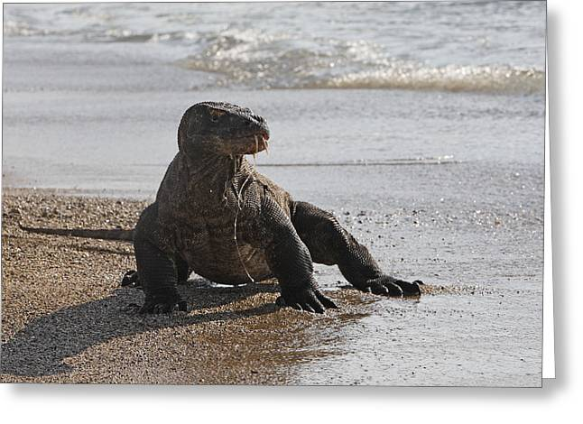 Komodo Dragon Greeting Card by M. Watson