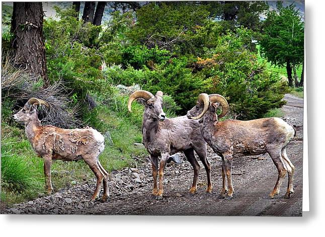 Roadway Greeting Cards - 3 Lads In The Road Greeting Card by Lisa Holland-Gillem