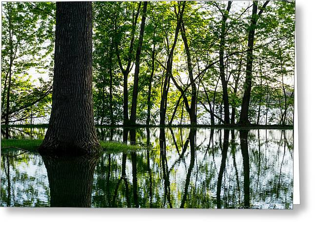 Flooding Photographs Greeting Cards - Lake Nokomis in a Wet Spring Greeting Card by Jim Hughes