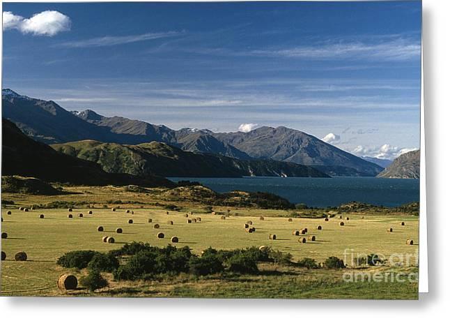 Hay Bales Greeting Cards - Lake Wanaka Greeting Card by Chris Selby