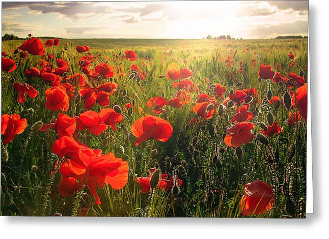 Springflowers Greeting Cards - Last Summer Greeting Card by Steffen Gierok