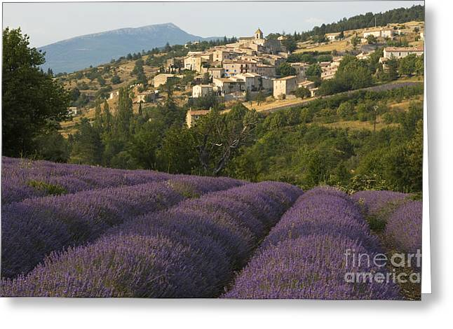 Provence Village Greeting Cards - Lavender Field, France Greeting Card by John Shaw