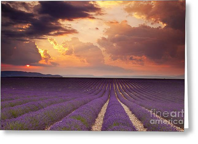 Cultivation Greeting Cards - Lavender Sunset Greeting Card by Brian Jannsen