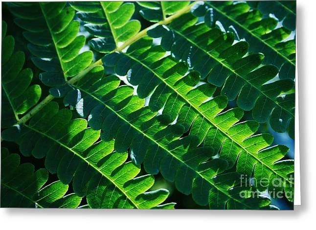 Macro Photography Greeting Cards - Leaves of Green  Greeting Card by Neal  Eslinger