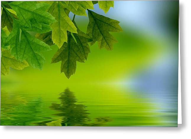 Background Greeting Cards - Leaves reflecting in water Greeting Card by Aged Pixel