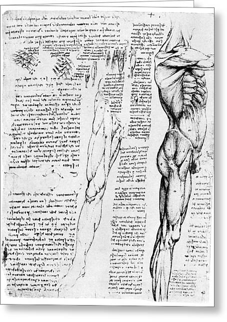 1510 Greeting Cards - LEONARDO: ANATOMY, c1510 Greeting Card by Granger