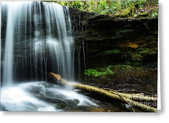 Rhododendron Maximum Greeting Cards - Lin Camp Branch Waterfall Greeting Card by Thomas R Fletcher