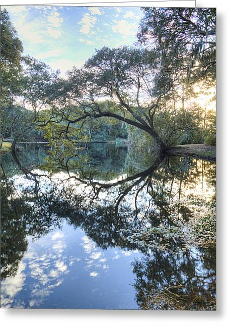 Live Oak Reflections Greeting Card by Dustin K Ryan