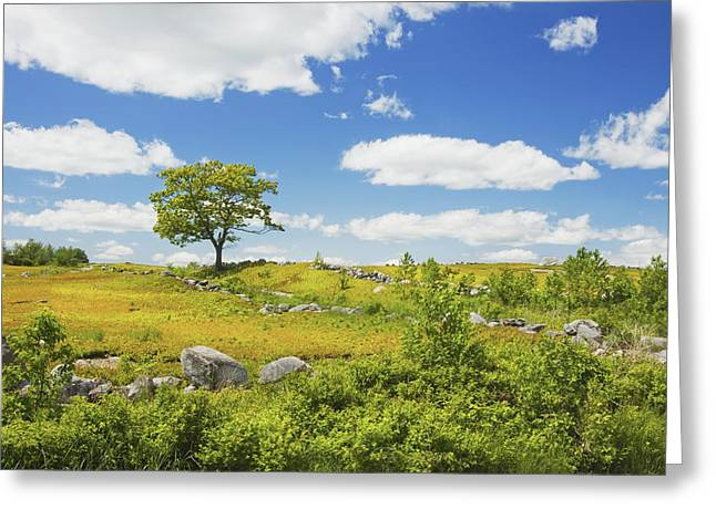Blueberry Barrens Greeting Cards - Lone Tree With Blue Sky In Blueberry Field Maine Greeting Card by Keith Webber Jr