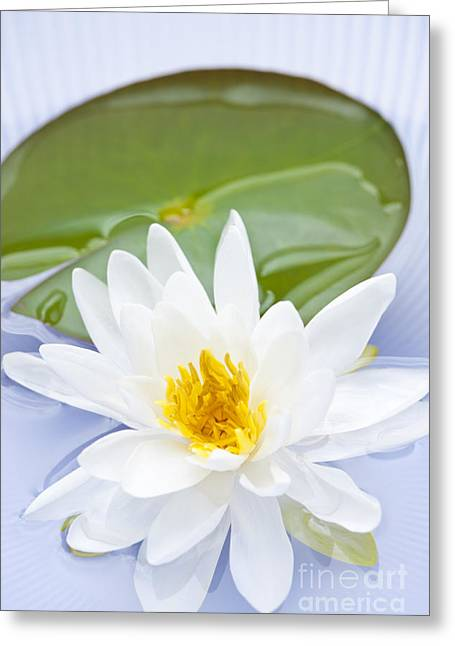 Lotus Leaves Greeting Cards - Lotus flower Greeting Card by Elena Elisseeva