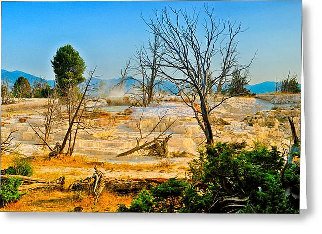 Yellowstone National Park Greeting Cards - Mammoth Upper Terrace Greeting Card by Greg Norrell