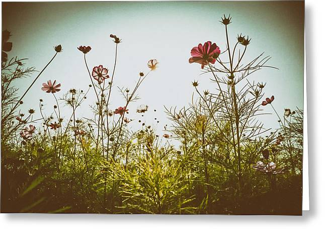 Ground Level Greeting Cards - Meadow Wildflowers Greeting Card by Mountain Dreams