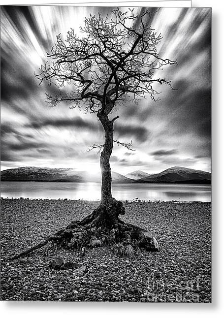 Scottish Landscapes Greeting Cards - Millarochy Bay Tree Loch Lomond Greeting Card by John Farnan
