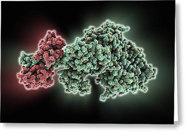 Muscle Contraction Greeting Cards - Molecular motor protein Greeting Card by Science Photo Library