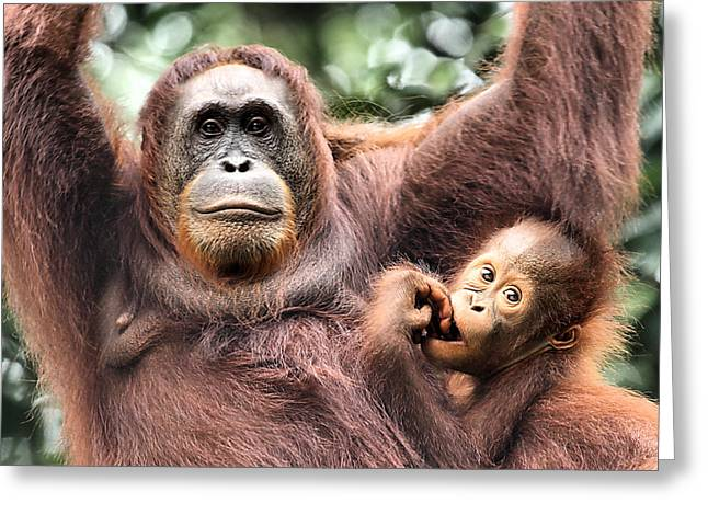Nature Center Greeting Cards - Mother and Baby Orangutan Borneo Greeting Card by Carole-Anne Fooks
