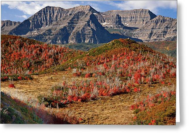 Bird Summit Greeting Cards - Mount Timpanogos Greeting Card by Utah Images