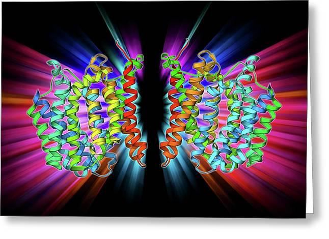 Multidrug Transporter Molecule Greeting Card by Laguna Design