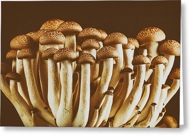 Fruiting Greeting Cards - Mushrooms Greeting Card by Mountain Dreams