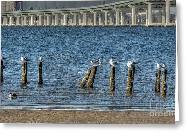 Biloxi Greeting Cards - Ocean Springs to Biloxi Bridge Greeting Card by David Bearden