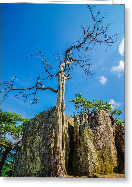 Old And Ancient Dry Tree On Top Of Mountain Greeting Card by Alex Grichenko