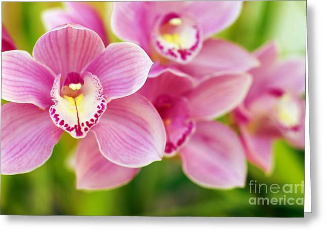 Purple Abstract Greeting Cards - Orchids Greeting Card by Carlos Caetano
