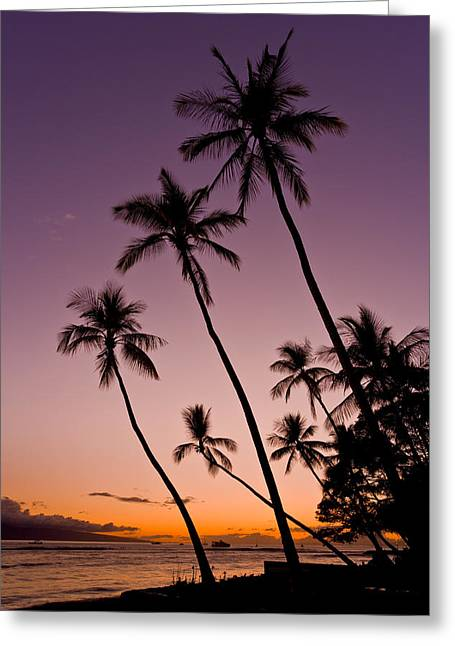 Lahaina Greeting Cards - 3 palm trees at sunset - Palms at sunset on the beach  Greeting Card by Nature  Photographer