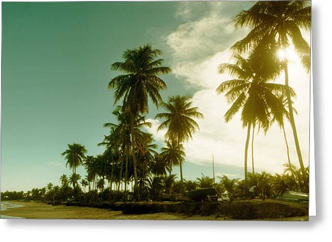 Sao Paulo Greeting Cards - Palm Trees On The Beach In Morro De Sao Greeting Card by Panoramic Images