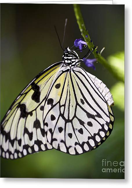 Space Flower Greeting Cards - Paper Kite Butterfly Greeting Card by Brandon Alms