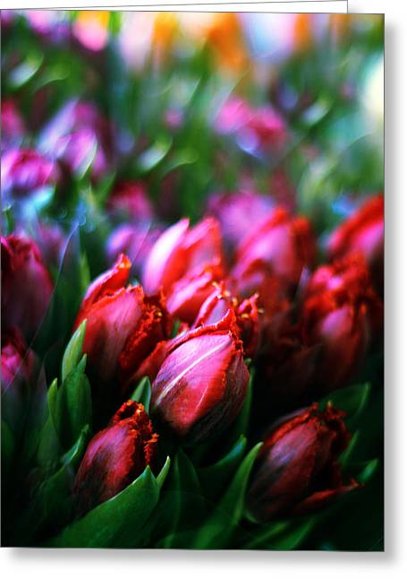 Floral Bouquets Greeting Cards - Parrot Tulips Greeting Card by Jessica Jenney