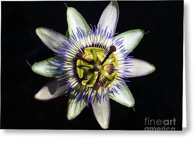 Passion Flower Greeting Card by Debra Thompson