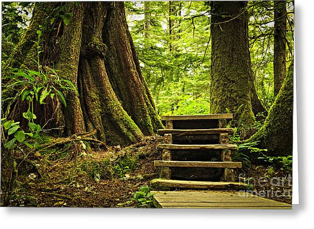 Cedar Tree Greeting Cards - Path in temperate rainforest Greeting Card by Elena Elisseeva