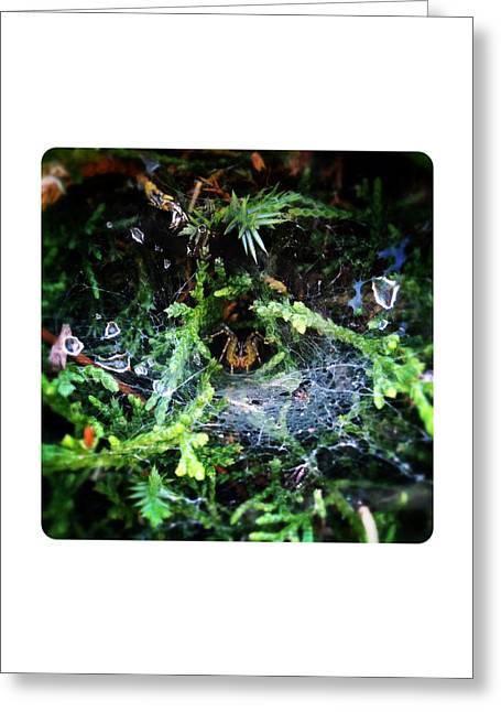 Dewdrops Digital Greeting Cards - Peek-A-Boo Greeting Card by Natasha Marco