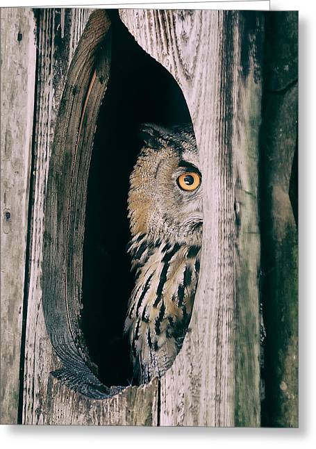 Lovely Owl Greeting Cards - Peekaboo Owl Greeting Card by Mountain Dreams