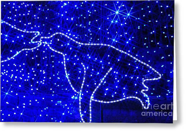 Christmas Lights Greeting Cards - Penguin Greeting Card by Mandy Judson