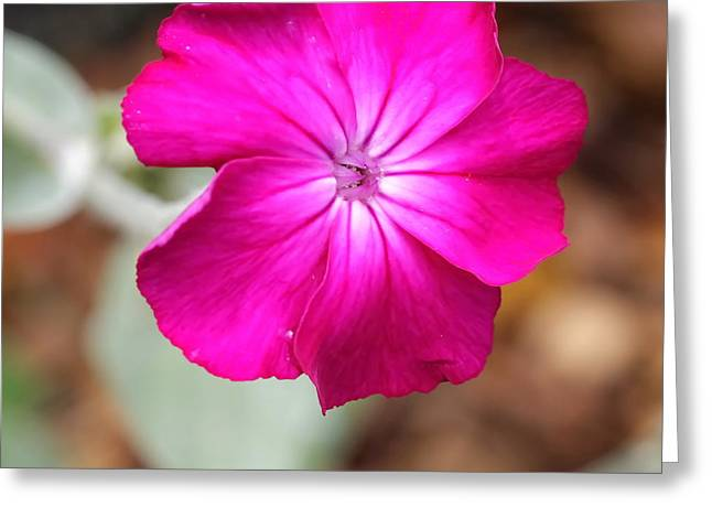 My Ocean Greeting Cards - Pink Greeting Card by   FLJohnson Photography