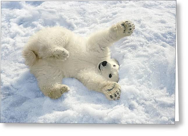 Characteristic Greeting Cards - Polar Bear Cub Playing In Snow Alaska Greeting Card by Mark Newman