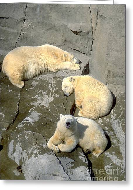 Gingrich Photo Greeting Cards - 3 Polars Greeting Card by Gary Gingrich Galleries