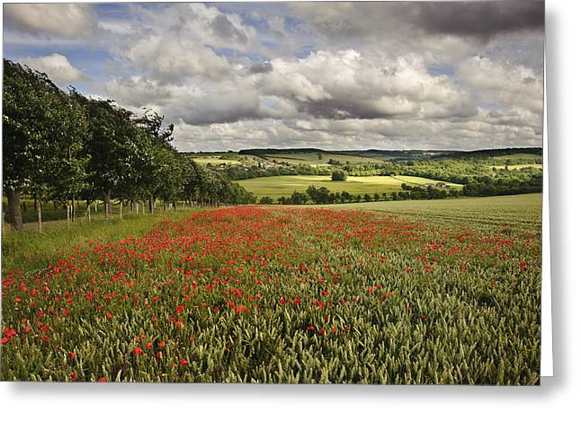 Summer Season Landscapes Greeting Cards - Poppy field in English countryside landscape Greeting Card by Matthew Gibson