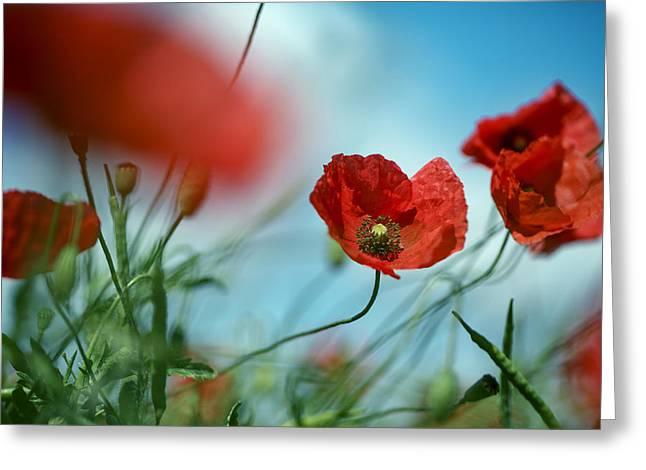 Luminous Greeting Cards - Poppy Meadow Greeting Card by Nailia Schwarz