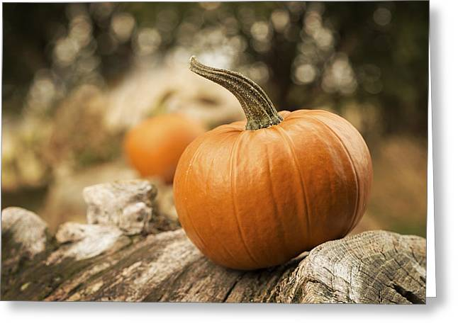 Tricks Greeting Cards - Pumpkins Greeting Card by Amanda And Christopher Elwell