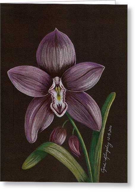 Cyndi Kingsley Greeting Cards - Purple Orchid Greeting Card by Cyndi Kingsley