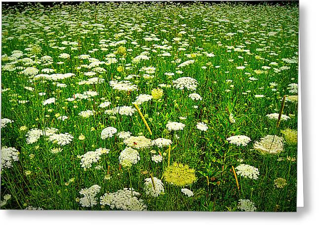 Butterfly House Of Wisconsin Greeting Cards - Queen Annes Lace Greeting Card by Carol Toepke