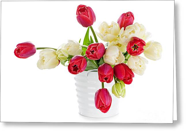Flowering Greeting Cards - Red and white tulips Greeting Card by Elena Elisseeva