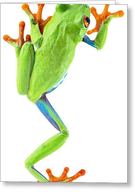 Aye Greeting Cards - Red Eyed Tree Frog Greeting Card by Dirk Ercken