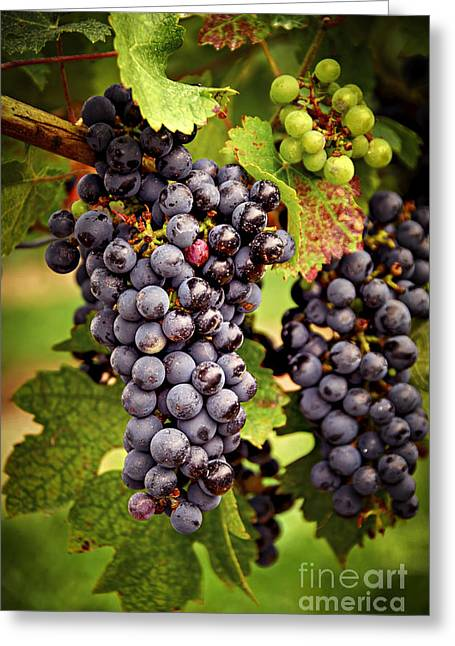 Blue Grapes Greeting Cards - Red grapes Greeting Card by Elena Elisseeva