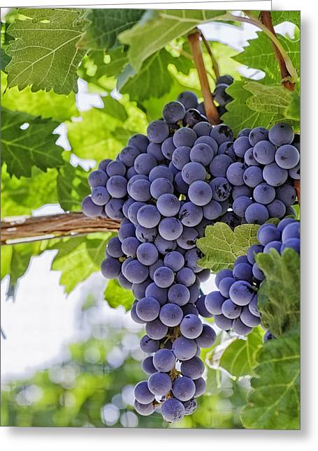 White Grape Greeting Cards - Red Wine Grapes Greeting Card by Teri Virbickis
