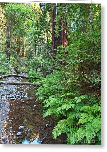 Redwood Forest Of Muir Woods National Monument In San Francisco. Greeting Card by Jamie Pham