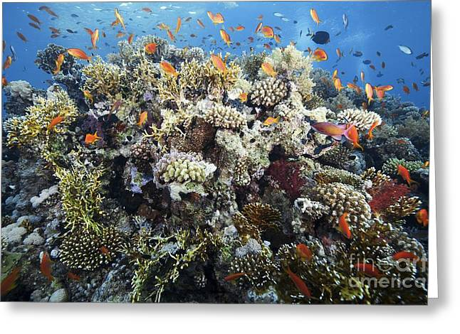 Aquatic Greeting Cards - Reef Scene Greeting Card by Alexander Semenov