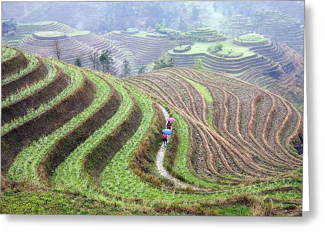 Farm Landscape Greeting Cards - Rice terraces Greeting Card by King Wu