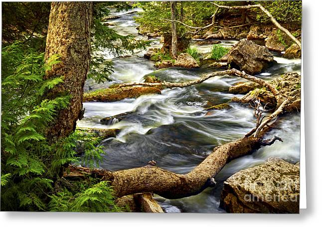 Stones Greeting Cards - River rapids Greeting Card by Elena Elisseeva